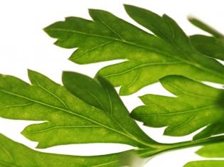 Herbs Linked to Novel Diabetes Treatment