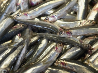 Omega 3: The Good, the Bad, and the Ineffective