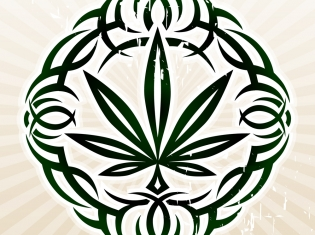 Cancer and Cannabis Do not Mix, But Lupus...
