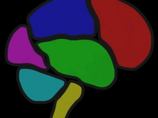 Brain Exercises: the Good and Bad News