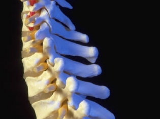 Protein at Root of Osteoporosis, Obesity