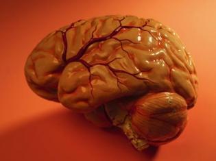 Reduced Gray Matter in Sleep Apnea Patients