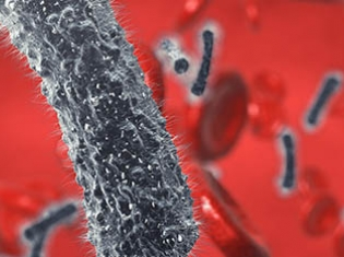 Asthma Linked to E. Coli Bloodstream Infections