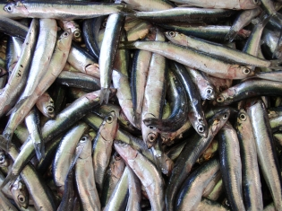 New York Company Recalls Pan Fried Anchovies Due to Possible Health Risk