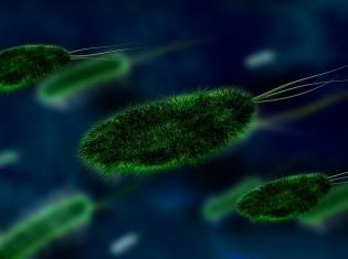 Bacterial Meningitis Decreased Across US