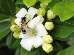 High Pollen Count Linked to ER visits