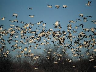 Experts Concerned Over Bird Flu