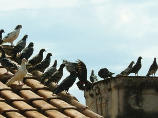 New Strain of Bird Flu Infects Human