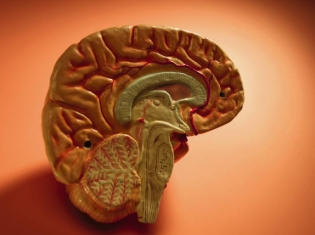 What's Bad for Heart Is Bad for Brain