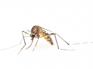 Officials Report First US-Transmitted Zika Case