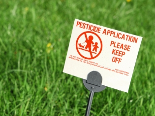 Another Danger of Pesticides
