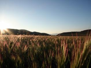 Hay Fever Readiness Revealed
