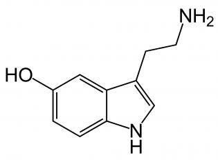 SERTified: Serotonin's Link With Autism