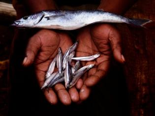 Fish Fends Off Diabetes