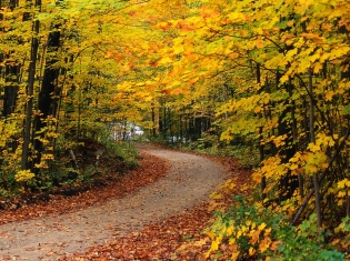 The Long and Winding Cancer Clinical Trial Road