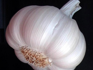 Garlic Repels More Than Just Vampires