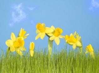Grass Pollen Allergy Relief is Around the Corner