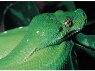 The Top 10 Things to Know About Snakebites