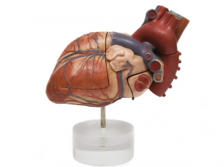IBD Could Affect Your Heart
