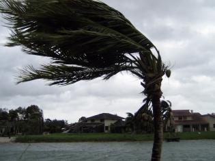 Forecasting Brain Tumor Growth Like Hurricanes
