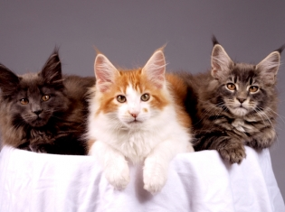 What Cat Litter & Suicide Have in Common