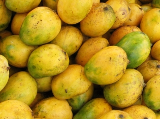 Mangoes Recalled Due to Possible Health Risk