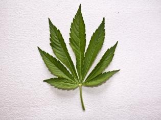 Medical Marijuana Tied to Drop in Opioid Overdose Deaths