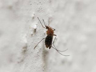 Global Progress Made Against Malaria