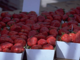 Strawberry Mania – Longer Seasons