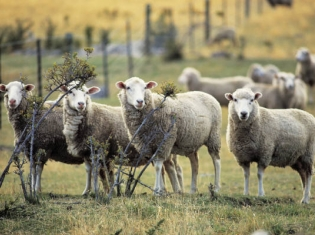 Counting Sheep After Discontinuing HRT