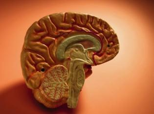 The (Neuro)-Logical Next Step