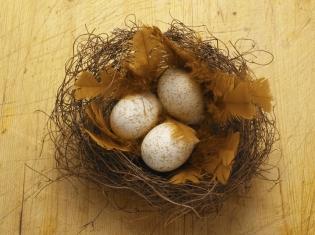 Get an Egg, Grow an Egg