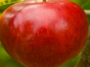 Apples Don't Fall Far From the Personality Tree