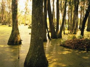 Louisiana Sinkhole Gobbling Up Land