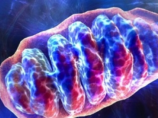 Early Markers for Alzheimer's Disease