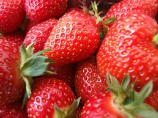 Esophageal Cancer is Allergic to Strawberries