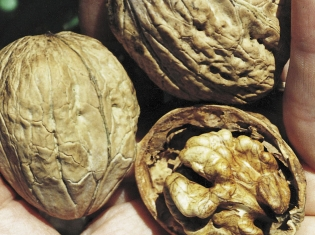 Cancer Does not Like Walnut Oil