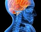 Mechanism Controls Marijuana-like Brain Substance