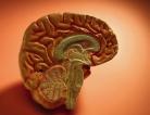 Control Alzheimer's Disease?