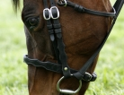 Researchers Closer to Genital Cancer Cure, No Horsing Around