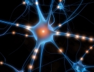 Neurons Cast Ballots in Decision-Making Process
