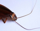 Cockroaches and Air Pollution Shouldn't Mix