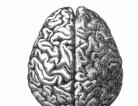 The Hyperactive Cranium