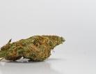Marijuana Might Alter Men's Sperm