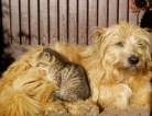 Dogs & Cats Linked to Healthier Babies