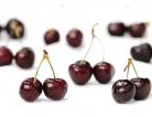 Allergy Alert for Peanuts in Dark Chocolate Cherries