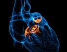 The Burden of Congenital Heart Defects