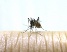 First Case of Chikungunya Discovered on US Mainland
