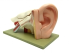 Hear Yourself Think: How Ear Implants Might Help