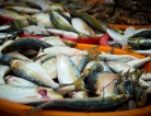FDA Issues Advice on Eating Fish